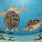 paintings of two sea turtles